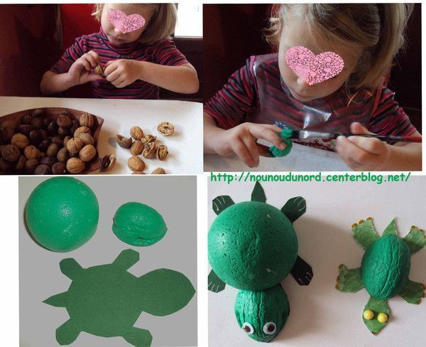 tortues coquilles de noix