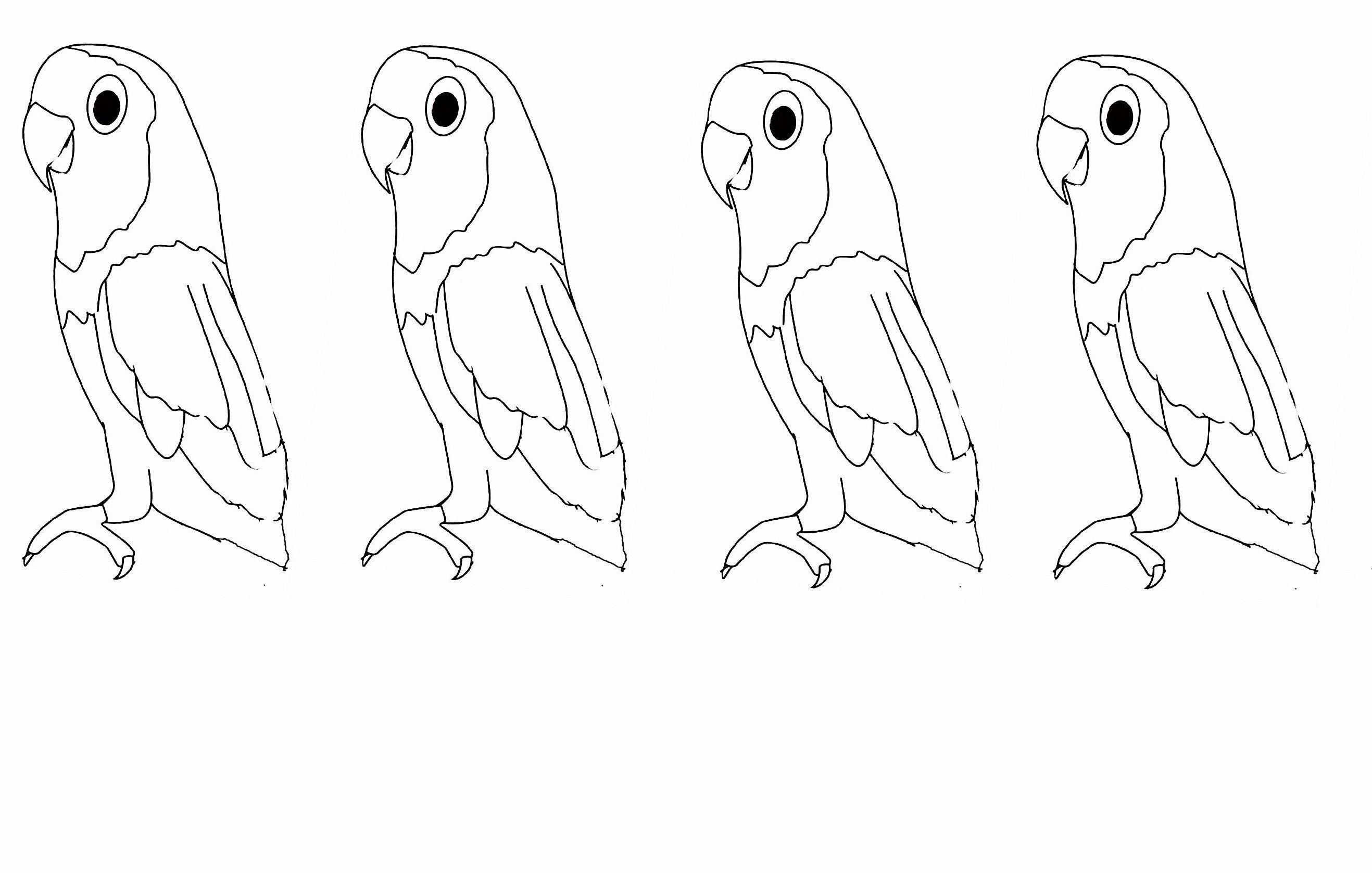 Coloriage perroquets - Perroquet dessin ...